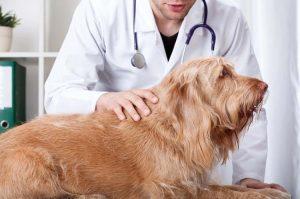 Astuces pour bien choisir son assurance chien